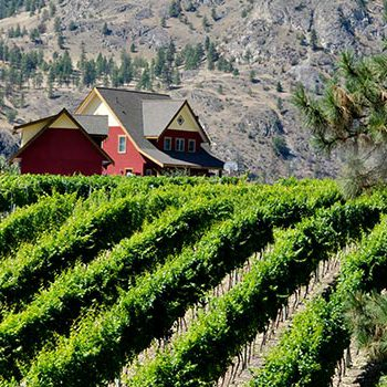 Oliver Osoyoos Wine Country - Vineyard
