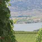 OOWA Wineries – Coming Soon