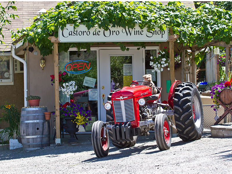 Castoro de Oro Winery